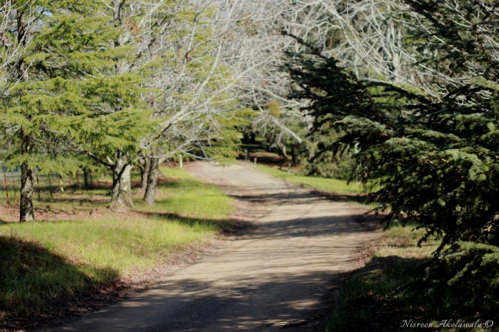 Bilpin Landscapes